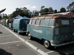Row of original Volkswagen Kombi buses parked at Octo Meet