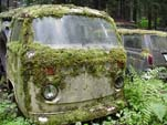 Secret VW Junkyard with Volkswagen Bay Window Bus Being Devoured by Moss!