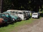 Forgotten VW Salvageyard With Group of Volkswagen T1 Split Window Buses