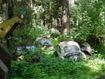 Volkswagen Salvage Yard With VW Beetles Hidden in The Bushes