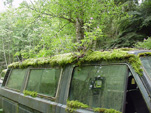 Volkswagen Salvage Yard With VW Vanagon Bus Covered With Moss and Ferns