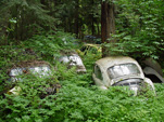 VW Salvage Yard with Volkswagen Beetles Stuck in the Weeds