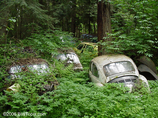 Volkswagen Junkyard and Wrecking Yard Images - Bustopia com